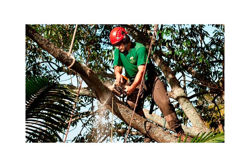 Branch removal utilising rigging techniques